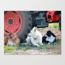 Farm Dogs Canvas Print