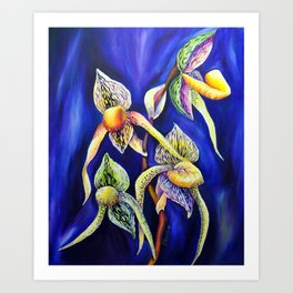 Orchid -  The Paphiopedilum , known as Lady's Slipper Art Print