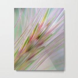 Grass Inflorescence Metal Print