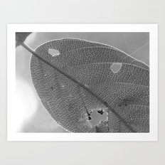leaf 2017 Art Print