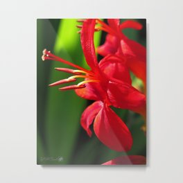 Crocosmia named Lucifer Metal Print