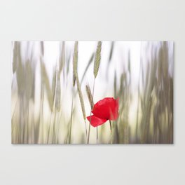 Poppy Abstract Canvas Print