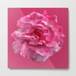Pink and White Rose 964 Metal Print