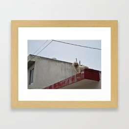 Furry Friends - Isla Mujeres, Mexico Framed Art Print
