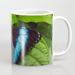 Banded Blue Morpho (𝘔𝘰𝘳𝘱𝘩𝘰 𝘢𝘤𝘩𝘪𝘭𝘭𝘦𝘴) Coffee Mug