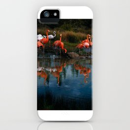 Flamingo Convention iPhone Case