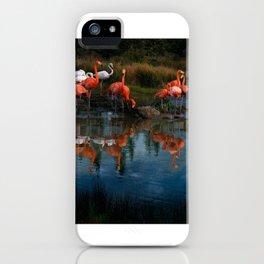 Flamingo Convention iPhone Case