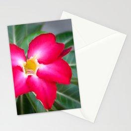 Resplendent exotic flower -Adenium Obesum Stationery Cards