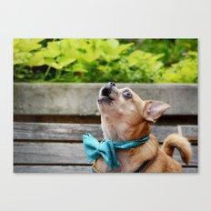 Singing Chihuahua  Canvas Print