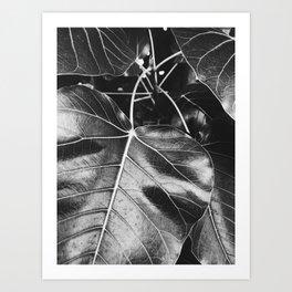 Plant Leaf Art Print