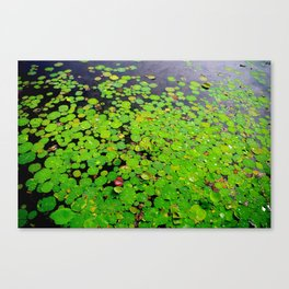 Lilly Palette Canvas Print