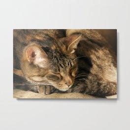 Sunny cat Metal Print