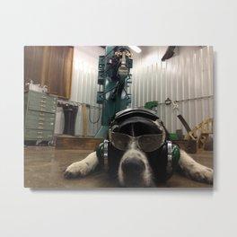 Working Dog Metal Print