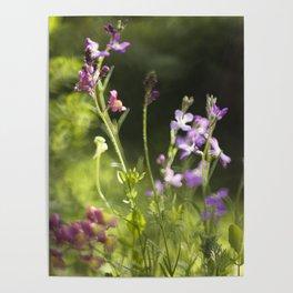 Blooming garden Poster