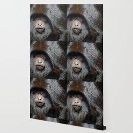 Black Howler Monkey Wallpaper