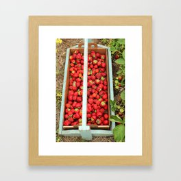 Strawberry Picking Framed Art Print