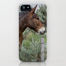 Mule in Wyoming iPhone Case