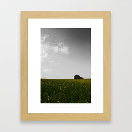 Canola 2 Framed Art Print