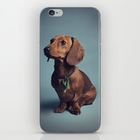 dachshund iPhone & iPod Skins featuring Dachshund by RikkiB