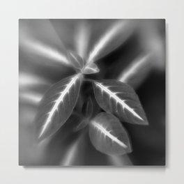 Botanica Obscura #7 Metal Print