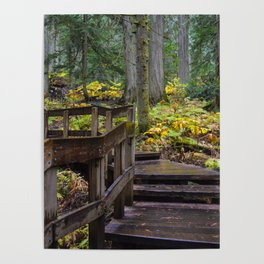 Giant Cedars Boardwalk in Revelstoke British Columbia, Canada Poster