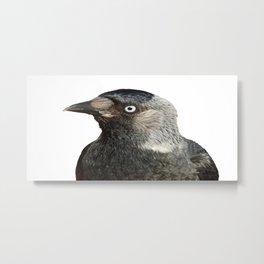 Jackdaw (Corvus monedula) Bird Portrait Vector Metal Print