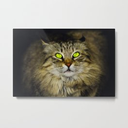 Cat with Green Eyes Metal Print