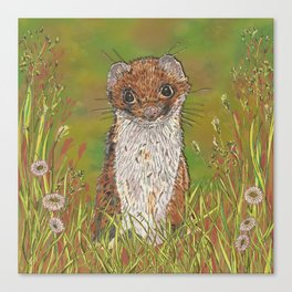 Summer Stoat Canvas Print