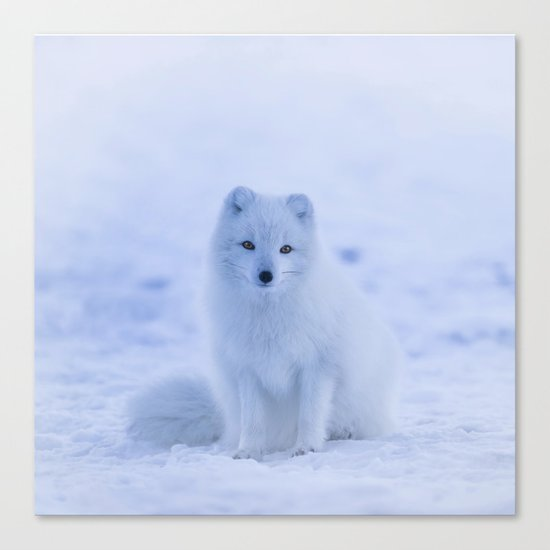 White Snow Fox Softness Canvas Print