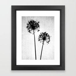 Dandelion Black and White Botanical Photo Framed Art Print