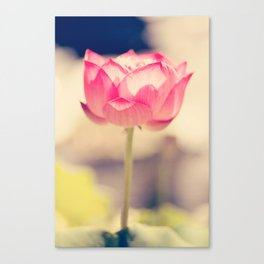 Pink Water Lotus Canvas Print