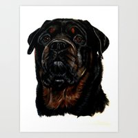 rottweiler Art Prints featuring Male Rottweiler by taiche