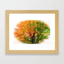Leaves Changing Colors Framed Art Print