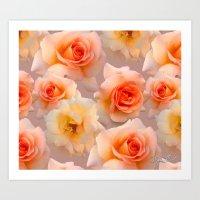 Blushing Rose. Art Print