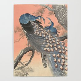 Two peacocks on tree branch, Ohara Koson Poster
