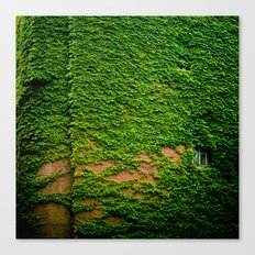 ivy takeover Canvas Print