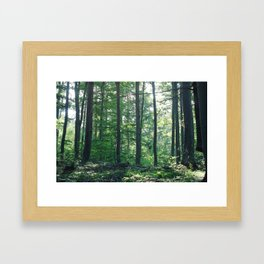into the woods 12 Framed Art Print