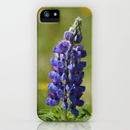 Nootka Lupine iPhone Case