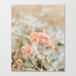 Blooming in the Dunes Canvas Print