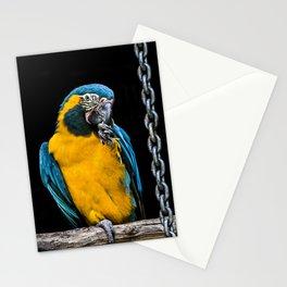 Macaw Portrait Stationery Cards