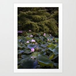 Kyoto Lily Pads Art Print