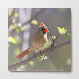 Watercolor Bird, Cardinal 01, Middletown, Maryland Metal Print