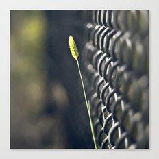 Twig & Fence Canvas Print