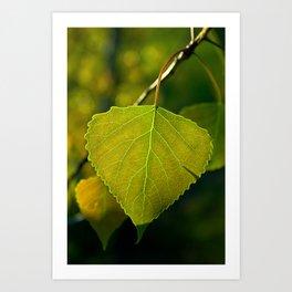 Leaf Green Art Print