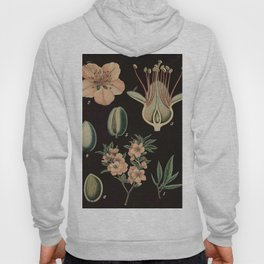 Botanical Almond Hoody