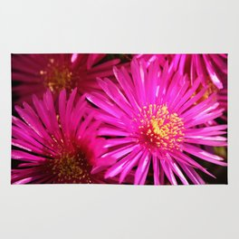 Ice Plant Pink Cactus Flowers Rug