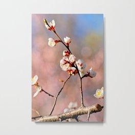 Japanese Apricot On Pink Metal Print