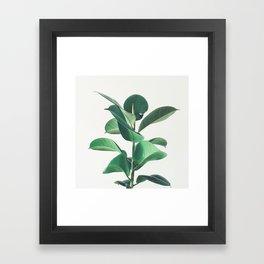 Rubber Fig Framed Art Print