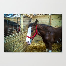 Small Horse Canvas Print