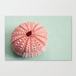 sea urchins series no 1 Canvas Print